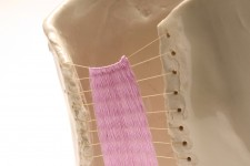 http://jennabonistalli.com/files/gimgs/th-67_Purple_Instrument_Detail.jpg